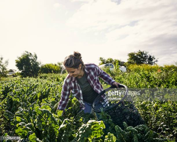 good things come to those who get their hands dirty - agricultural occupation stock pictures, royalty-free photos & images