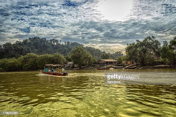.goodmorning jungle - bako national park stock pictures, royalty-free photos & images