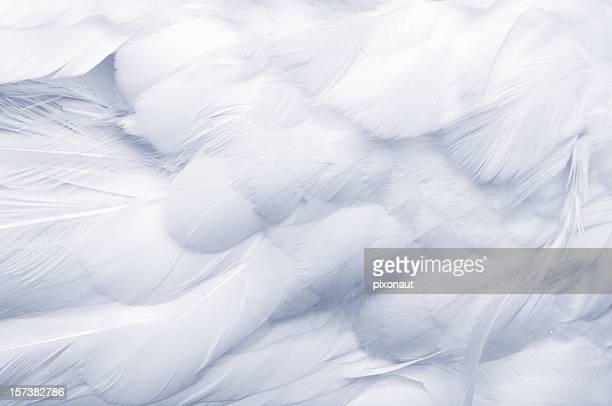 goose feathers background - feather stock pictures, royalty-free photos & images