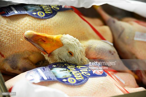 A goose is displayed in the poultry department of the Rungis Market on December 13 2013 in Rungis France Rungis is the world's largest wholesale...