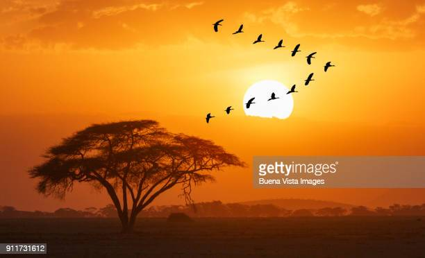 gooses flying against sun - afrika stockfoto's en -beelden