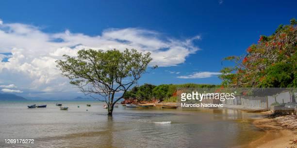 gorda beach in buzios, rio de janeiro state - marcelo nacinovic stock pictures, royalty-free photos & images