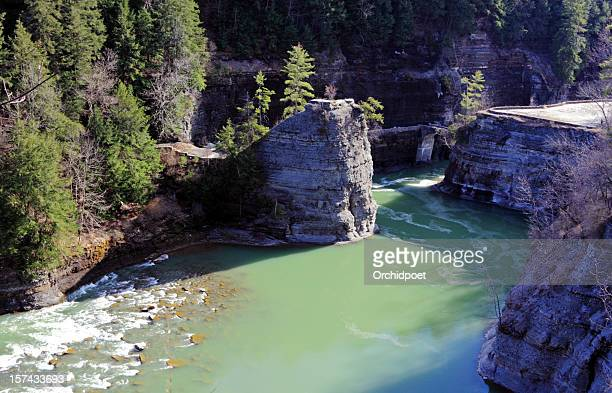 gorge along genesee river - eastern white pine stock pictures, royalty-free photos & images