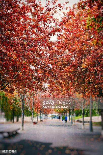 Gorgeous Autumn Colours of Maple Alley
