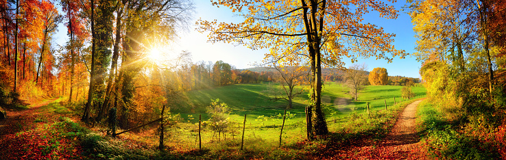 Gorgeous landscape panorama in autumn 598060548