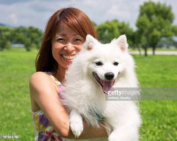 gorgeous little japanese spitz - japanese spitz stock pictures, royalty-free photos & images