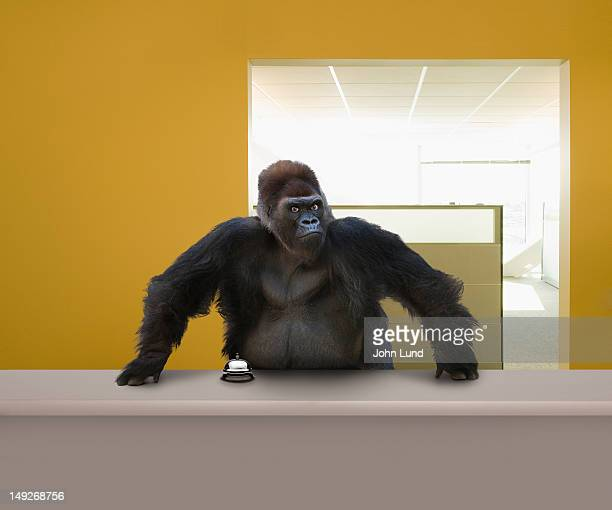 Gorilla at the help desk