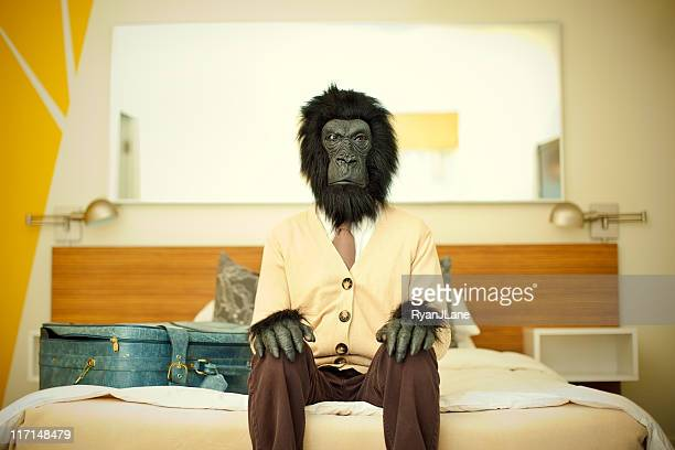 gorilla business man in hotel room - animal costume stock pictures, royalty-free photos & images