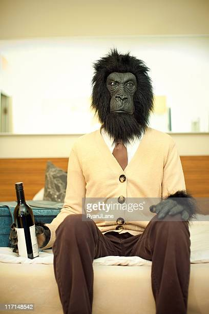gorilla business man in hotel room - monkey suit stock pictures, royalty-free photos & images