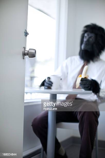 gorilla business man in office break room - monkey suit stock pictures, royalty-free photos & images