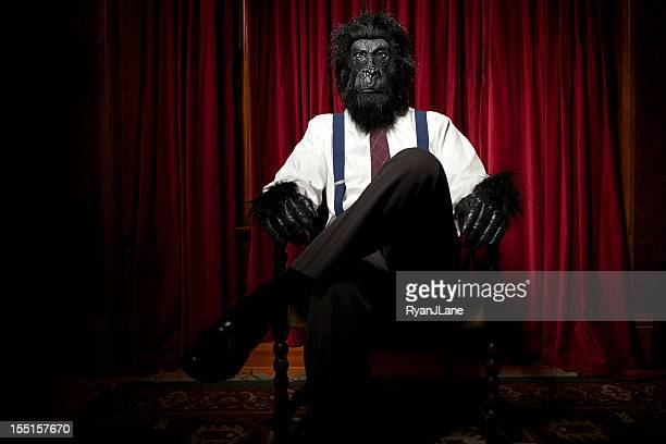 gorilla business man in regal room - monkey suit stock pictures, royalty-free photos & images