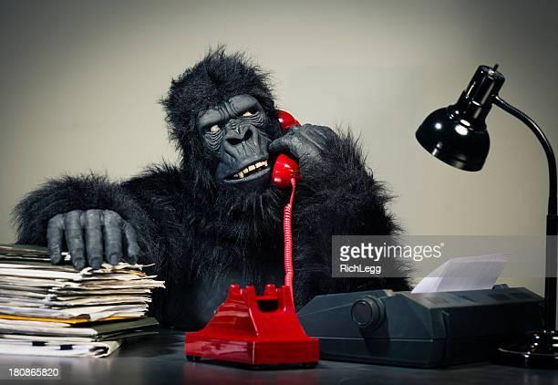 gorilla businessman - monkey suit stock pictures, royalty-free photos & images