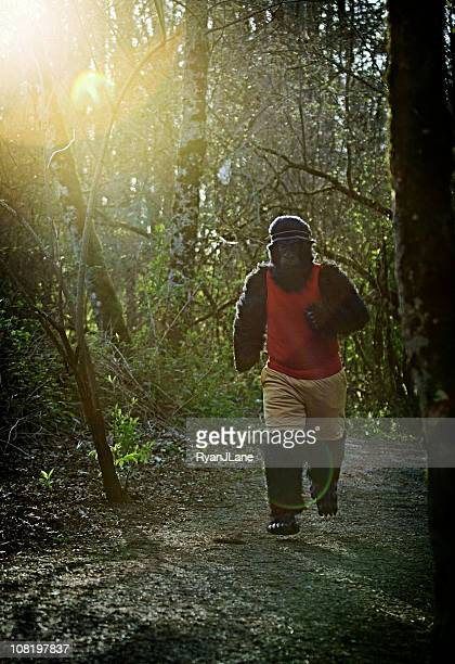 Gorilla In Track Suit Running Through The Woods