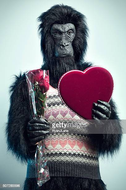 gorilla man with valentines day gifts - valentine monkey stock pictures, royalty-free photos & images