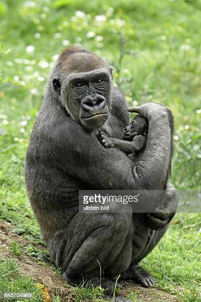 Gorilla Mutter mit Gorillababy