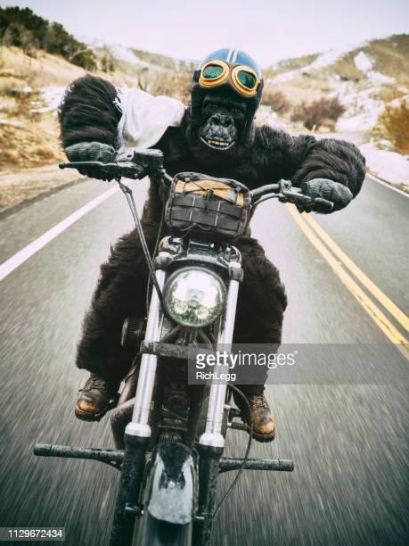 Gorilla on a Motorcycle