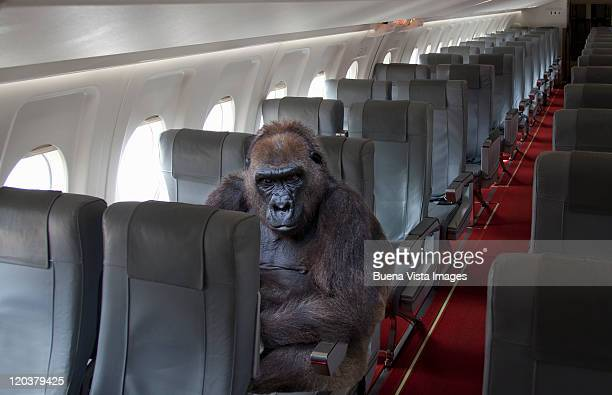 Gorilla sitting on airplane seat