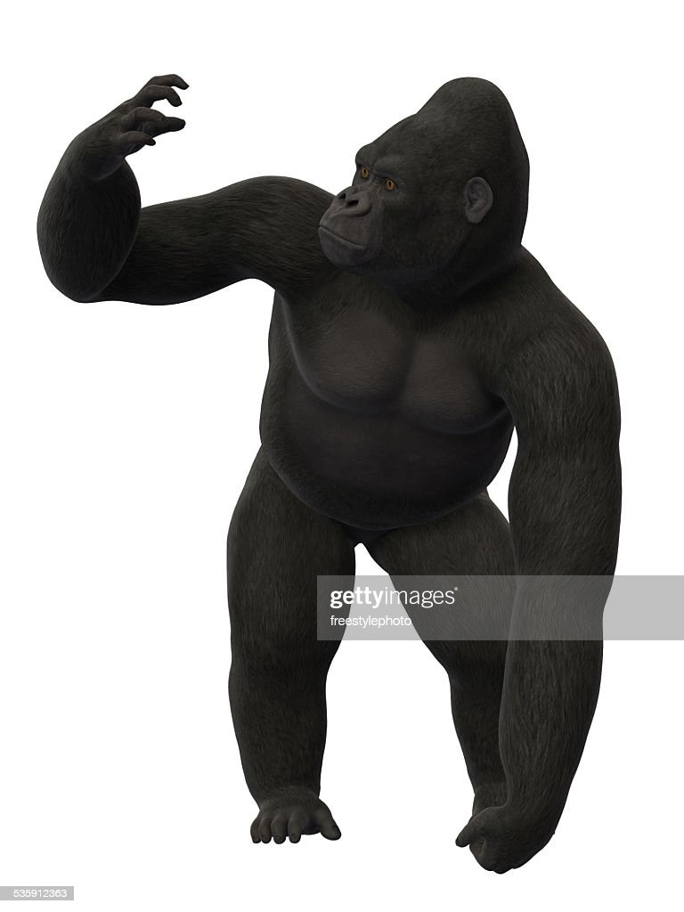Gorilla standing : Stock Photo