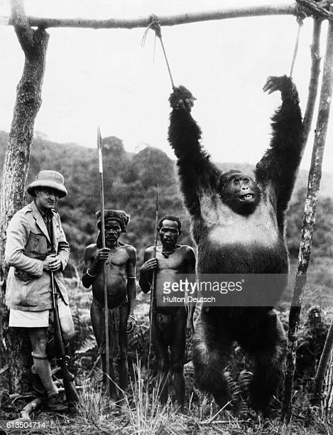 Gorilla Strung Up by African Hunters