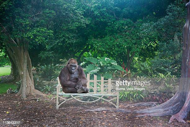 Gorilla waiting on a bench
