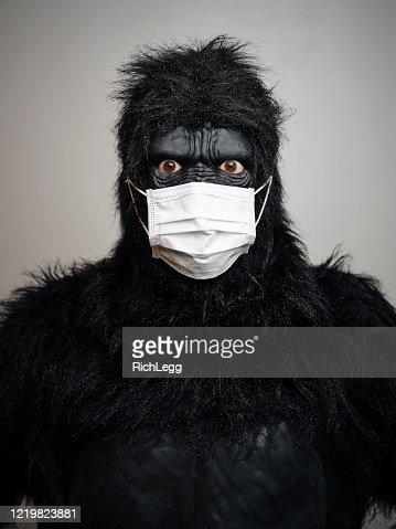gorilla wear sverige