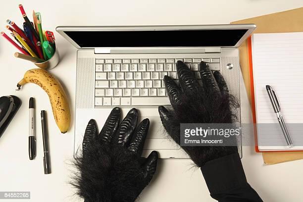 Gorilla's hands typing on laptop