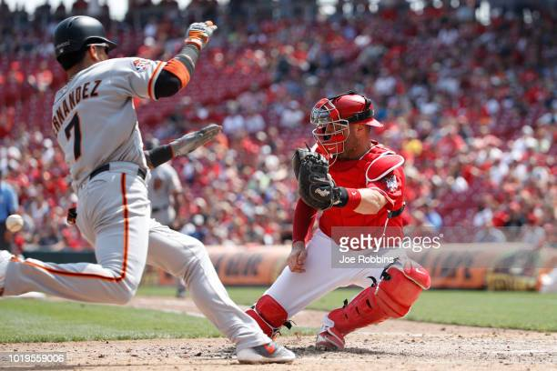 Gorkys Hernandez of the San Francisco Giants scores a run ahead of the throw to Curt Casali of the Cincinnati Reds in the seventh inning at Great...