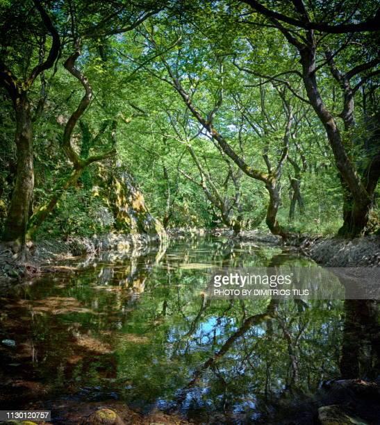 Gormos  river 3