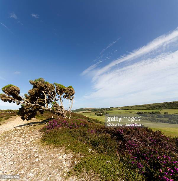gorse tree - s0ulsurfing stock pictures, royalty-free photos & images