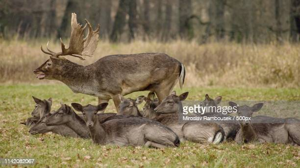 i got you! - czech republic stock pictures, royalty-free photos & images