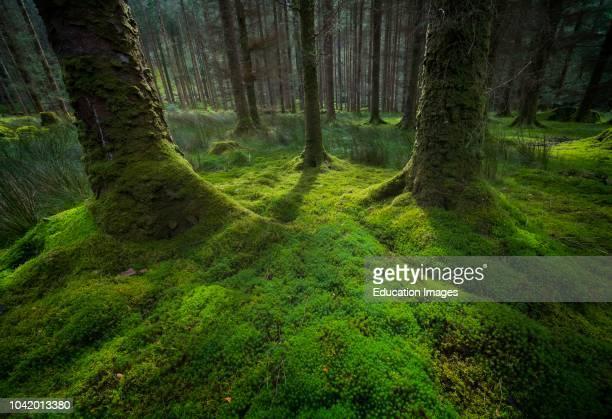 Gougane Barra National Forest Park, Gougane Barra, County Cork, West Cork, Ireland.