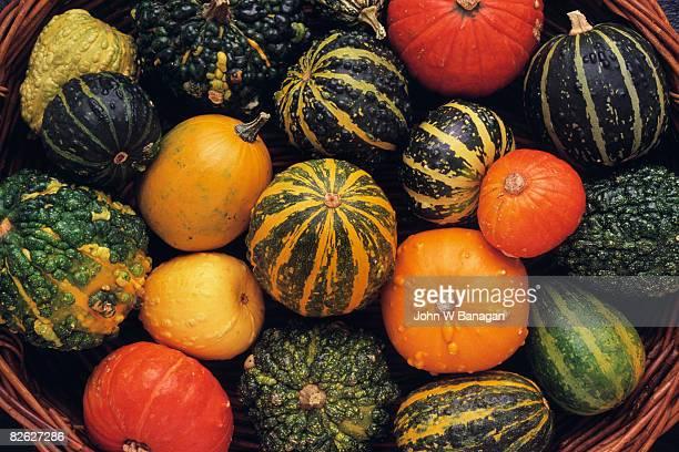 gourds in basket - gartenkürbis stock-fotos und bilder