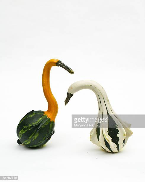 Gourds posed as birds, white background