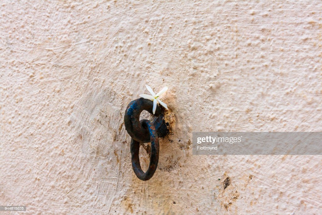 Gozo wall detail with flower, Malta : Stock Photo