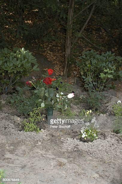 Grab von Horst Buchholz Waldfriedhof Westend Berlin Deutschland Europa Blume Rose Schauspieler Promi Promis Prominente Prominenter PNr 613/2003 HS...