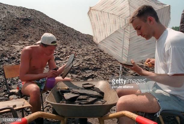 Grabungsstellenleiter Bruno Behr und GeografieStudent Walter Geibert suchen am 1261996 in den ÖlschieferPlatten der Grube Messel bei Darmstadt nach...