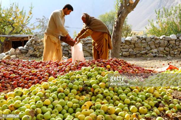 grading and packing the apples - gilgit baltistan stock photos and pictures