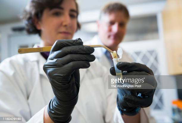 ISABEL TX MARCH 22 UTRGV graduate student Krista Ruppert pulls an environmental DNA filter out of a test tube for genetic sequencing in the...