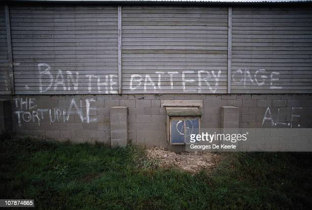 Graffiti by members of the militant animal rights group the Animal Liberation Front on a battery shed protesting at intensive farming techniques UK...