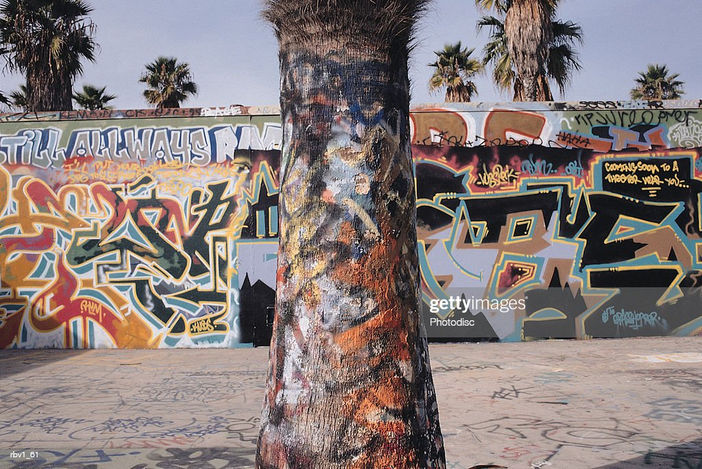 graffiti dressed palm trees and stone walls under a blue sky : Foto de stock