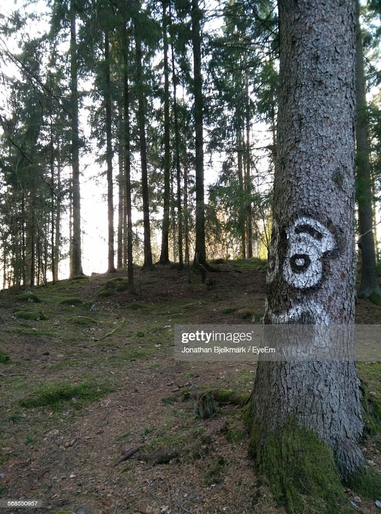 Graffiti On Tree Trunk In Forest : Stock Photo