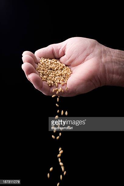 Grain and Hand