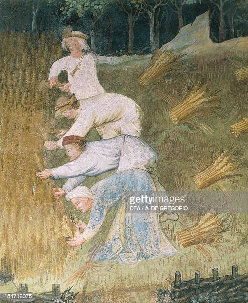 Grain harvest detail from the Month of August panel taken from Cycle of the Months by Master Venceslao fresco Tower Aquila Buonconsiglio Castle...