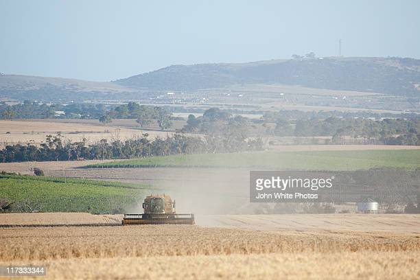 Grain harvester in wheat field