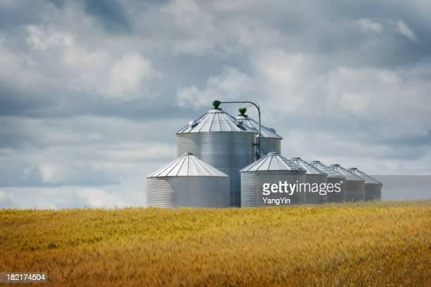 Silos à Grain champ de blé dans Harvest paysage Culture agricole