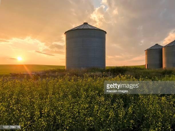 grain silos - キャノーラ ストックフォトと画像