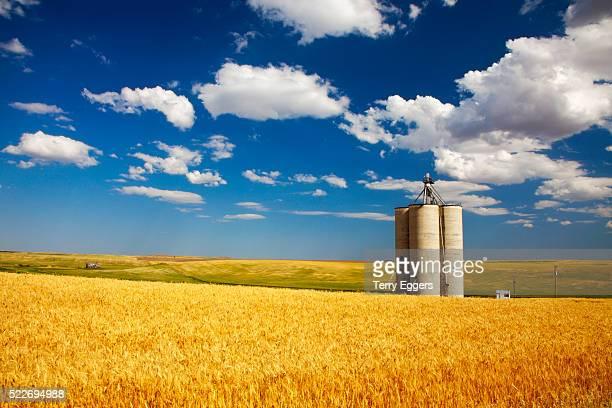 Grain Silo's standing in Harvest Wheat Field