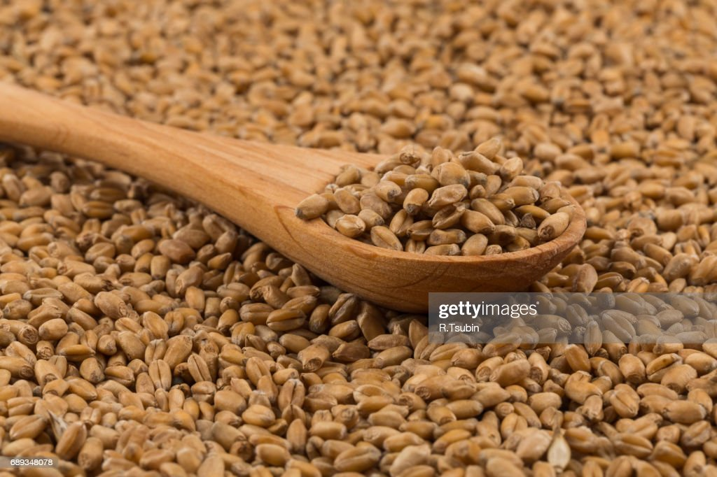 Grain wheat in wooden spoon : Stock Photo