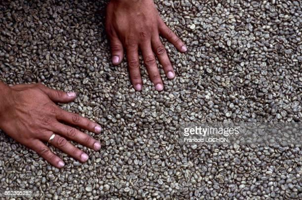 Grains de café en 1999 Colombie