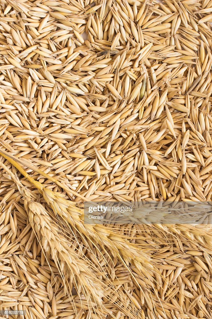 Grains of oats and wheat spikelets. Top view : Stock Photo